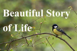 Beautiful Story of Life